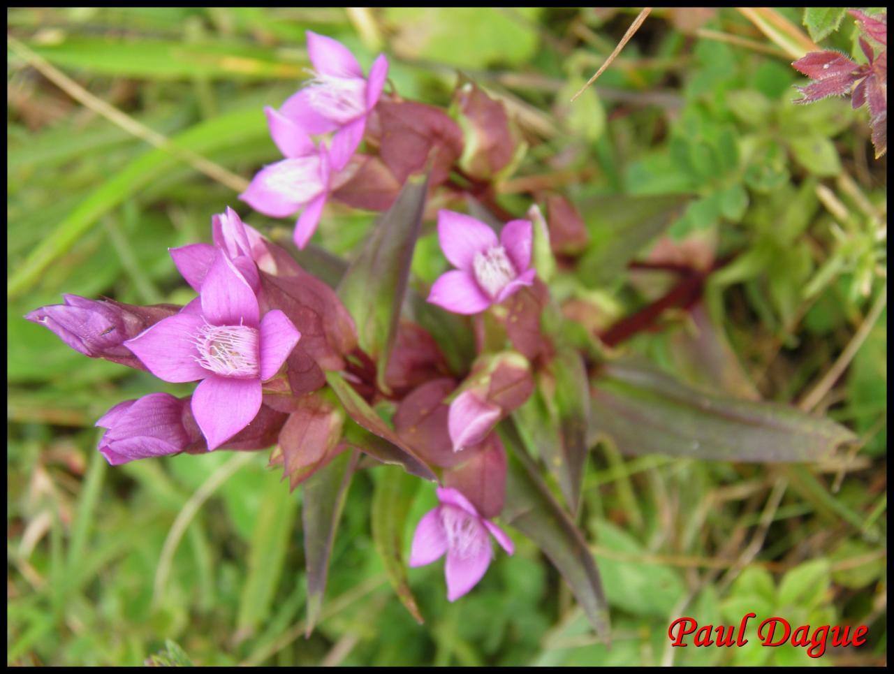 fleurs violettes à 4 pétales ou moins