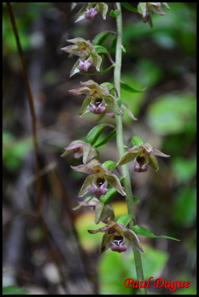 fleurs vertes à symétrie bilatérale
