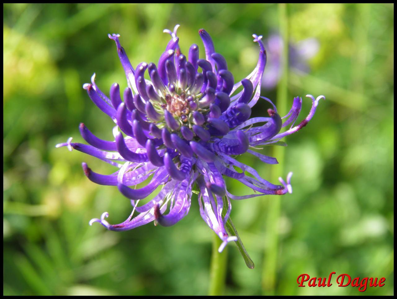 fleurs violettes à symétrie bilatérale