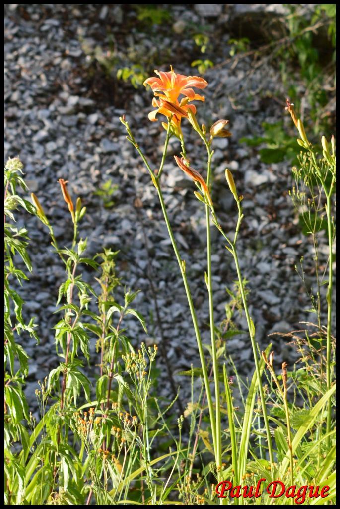 fleurs orange à 6 pétales